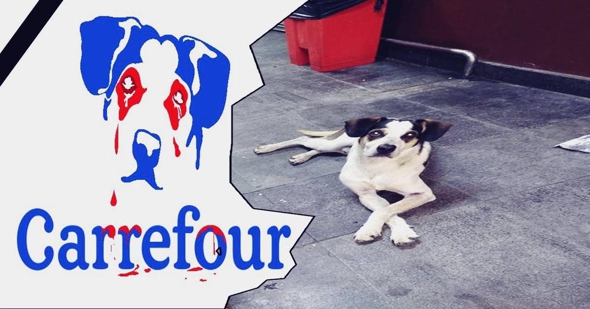 Cremação De Cachorro Morto No Carrefour Pode Prejudicar A